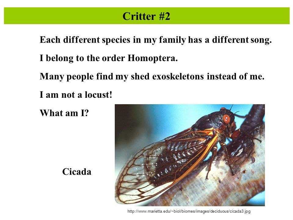 Critter #2 Each different species in my family has a different song.