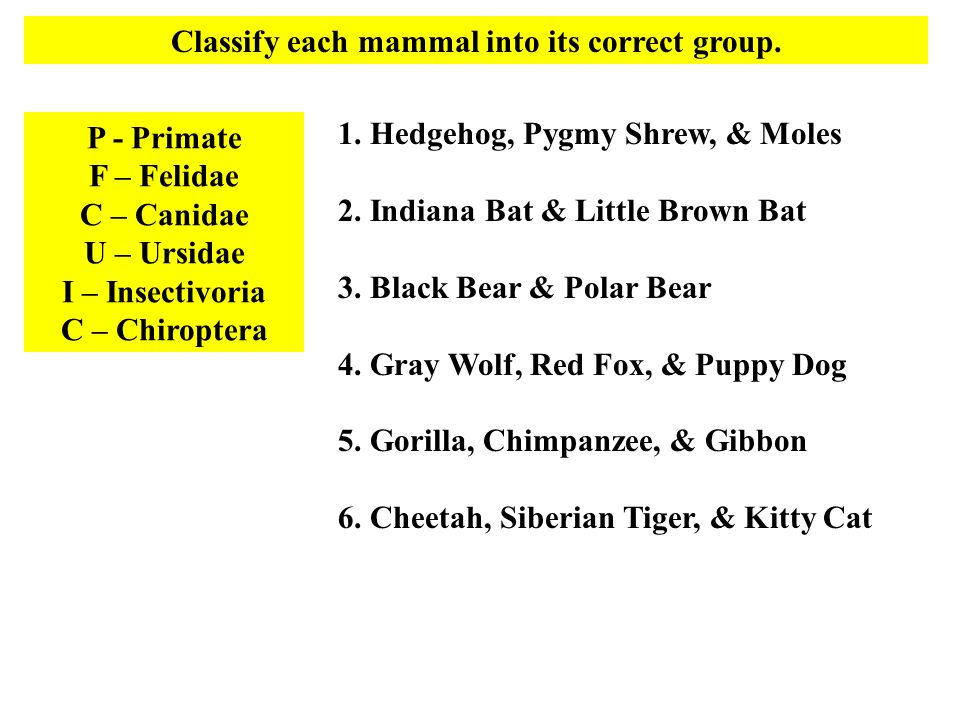 Classify each mammal into its correct group.