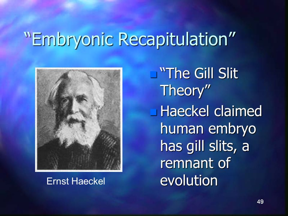 49 Embryonic Recapitulation n The Gill Slit Theory n Haeckel claimed human embryo has gill slits, a remnant of evolution Ernst Haeckel