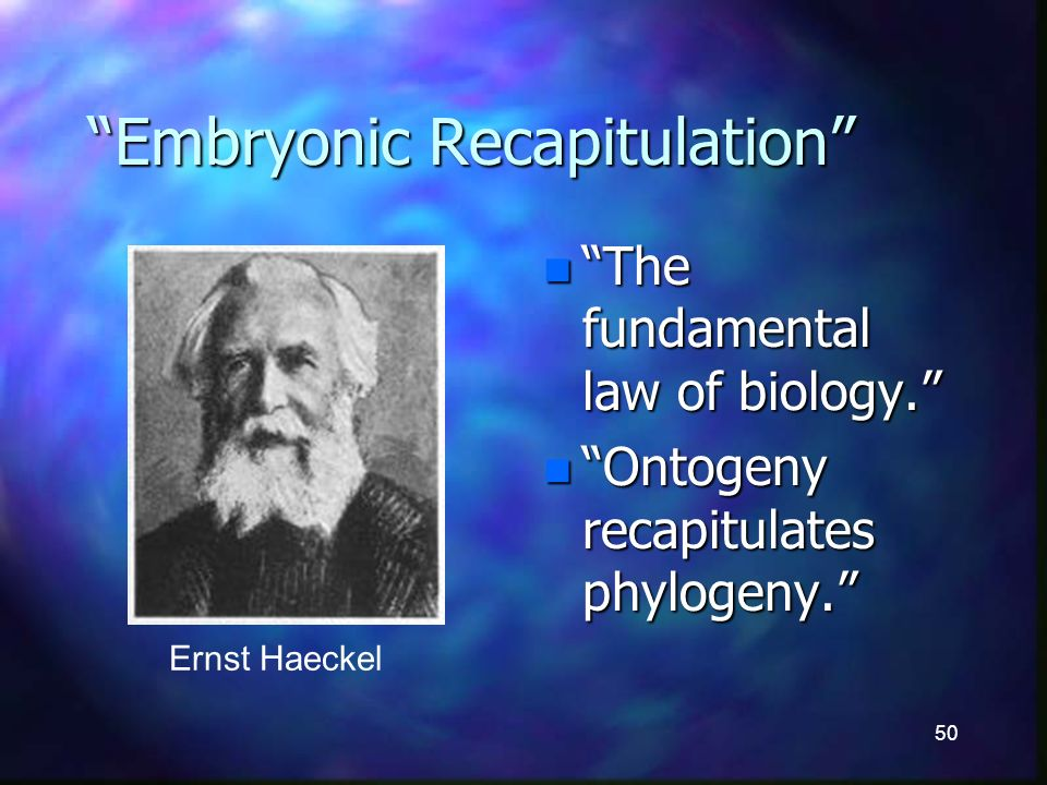 50 Embryonic Recapitulation n The fundamental law of biology.