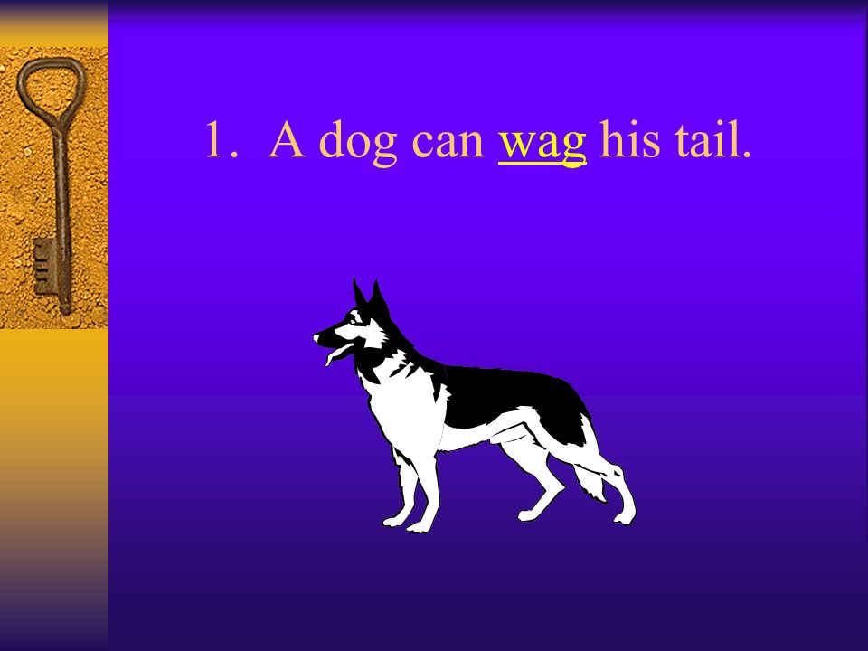 1. A dog can wag his tail.