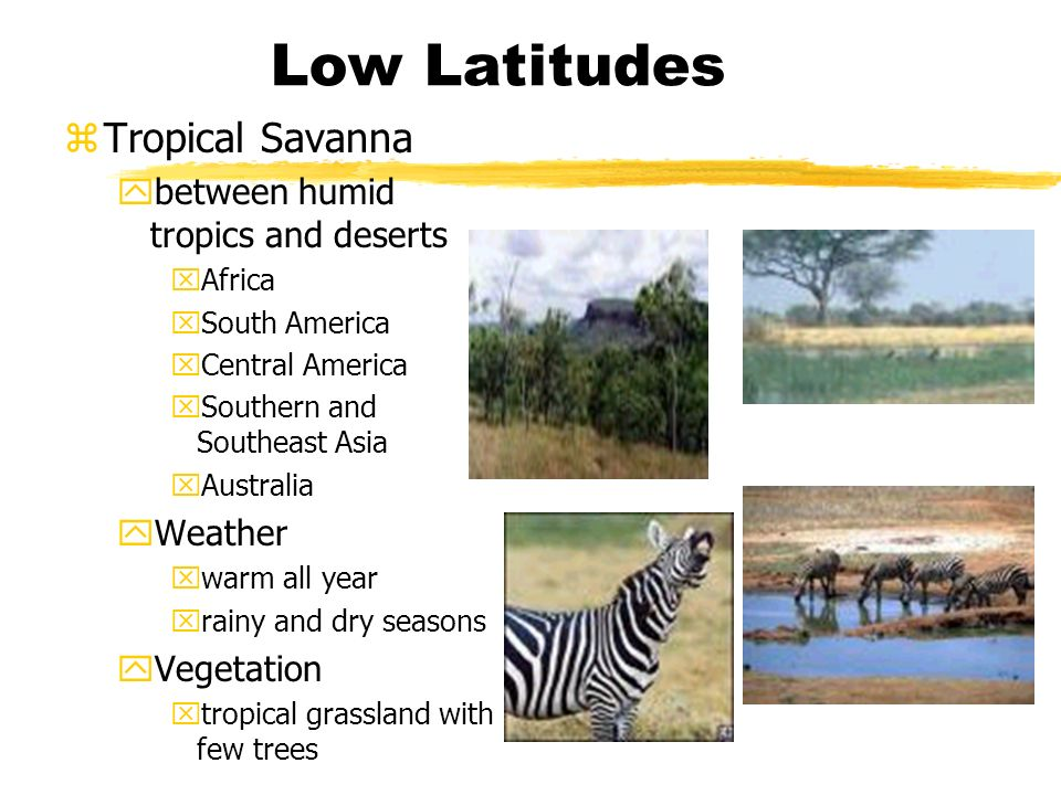 Low Latitudes zTropical Savanna ybetween humid tropics and deserts xAfrica xSouth America xCentral America xSouthern and Southeast Asia xAustralia yWeather xwarm all year xrainy and dry seasons yVegetation xtropical grassland with few trees