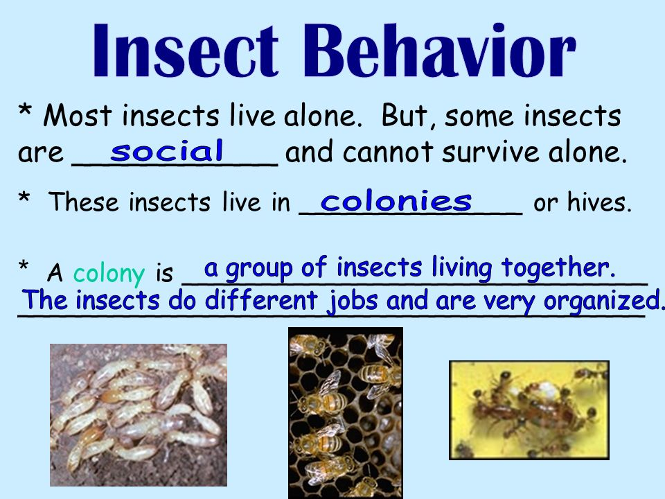 * Most insects live alone. But, some insects are ___________ and cannot survive alone.