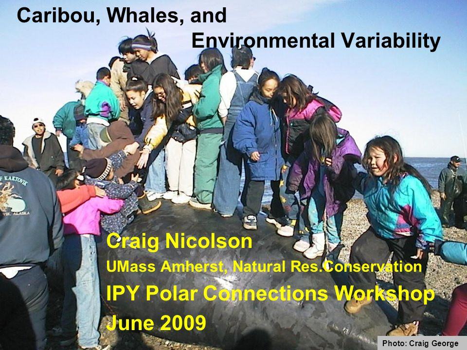 Caribou, Whales, and Environmental Variability Craig Nicolson UMass Amherst, Natural Res.Conservation IPY Polar Connections Workshop June 2009 Photo: Craig George