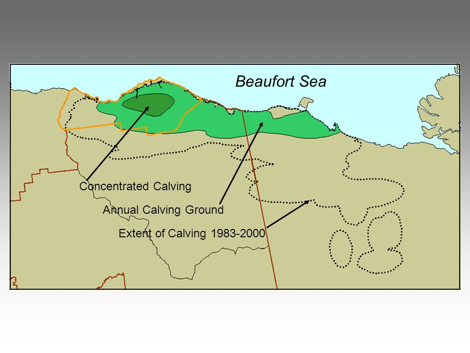 Beaufort Sea Extent of Calving 1983-2000 Annual Calving Ground Concentrated Calving