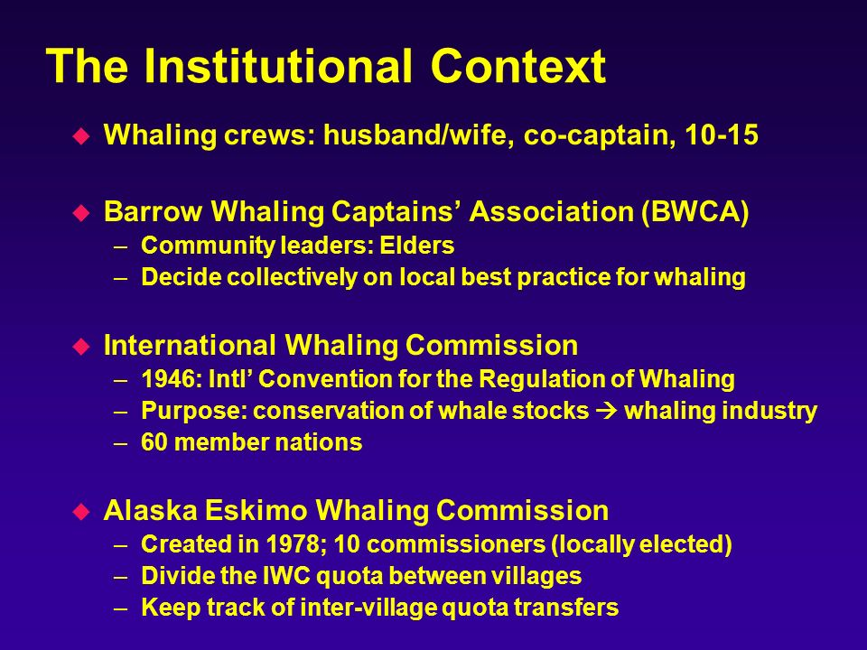 The Institutional Context u Whaling crews: husband/wife, co-captain, 10-15 u Barrow Whaling Captains Association (BWCA) –Community leaders: Elders –Decide collectively on local best practice for whaling u International Whaling Commission –1946: Intl Convention for the Regulation of Whaling –Purpose: conservation of whale stocks whaling industry –60 member nations u Alaska Eskimo Whaling Commission –Created in 1978; 10 commissioners (locally elected) –Divide the IWC quota between villages –Keep track of inter-village quota transfers
