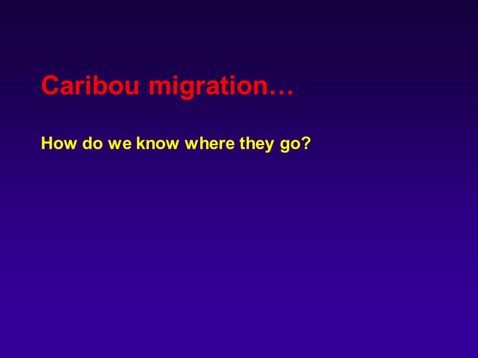 Caribou migration… How do we know where they go