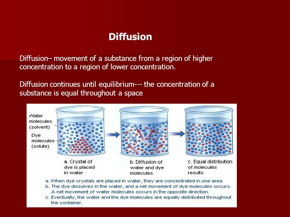 Diffusion Diffusion– movement of a substance from a region of higher concentration to a region of lower concentration.