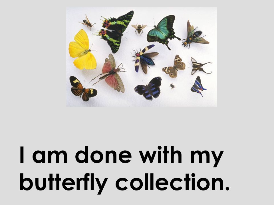 I am done with my butterfly collection.