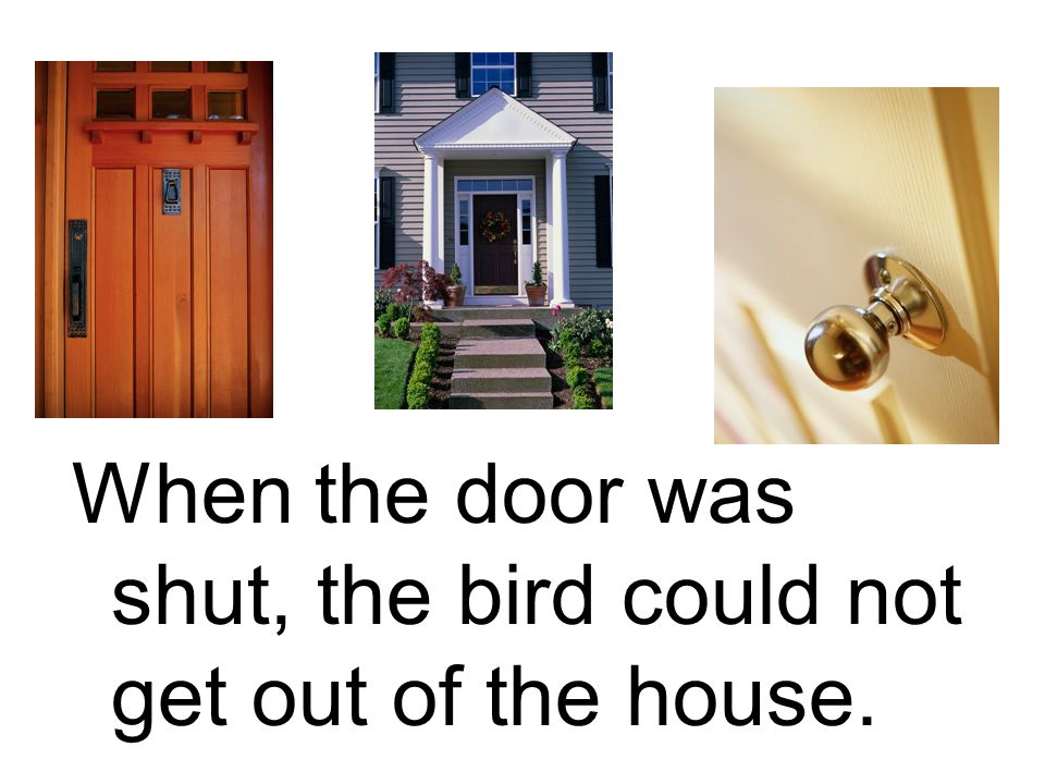 When the door was shut, the bird could not get out of the house.