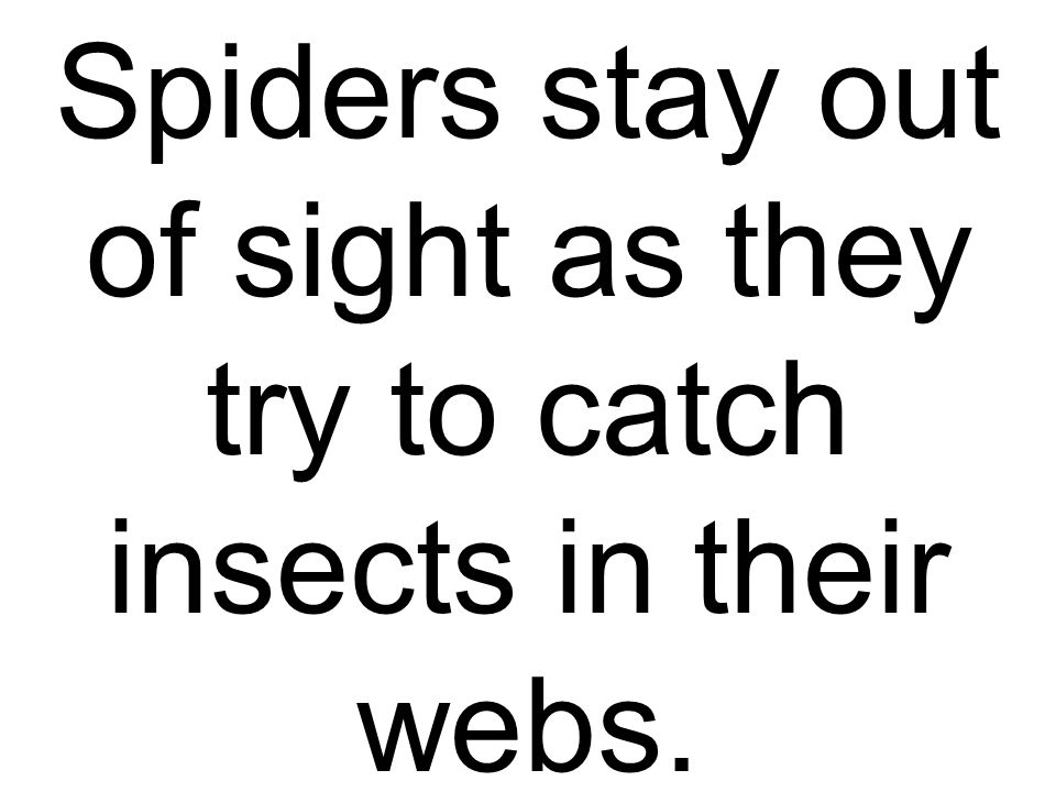 Spiders stay out of sight as they try to catch insects in their webs.