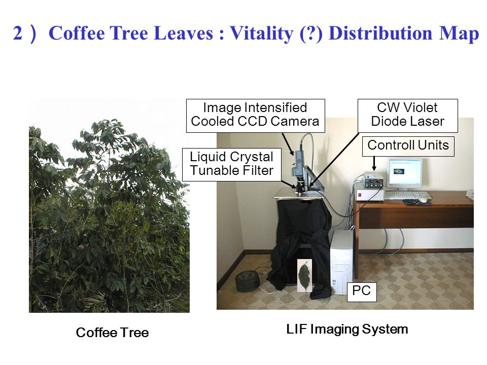 2 Coffee Tree Leaves : Vitality ( ) Distribution Map Image Intensified Cooled CCD Camera CW Violet Diode Laser Liquid Crystal Tunable Filter PC Coffee Tree LIF Imaging System Controll Units