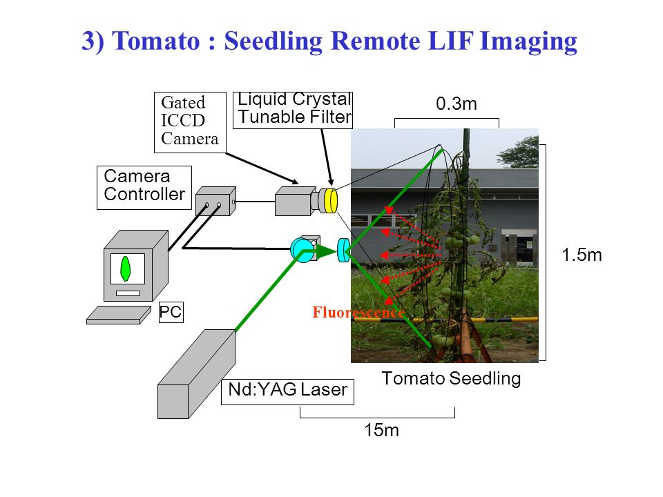 3) Tomato : Seedling Remote LIF Imaging 1.5m 0.3m Camera Controller Gated ICCD Camera Liquid Crystal Tunable Filter Tomato Seedling Fluorescence Nd:YAG Laser PC 15m