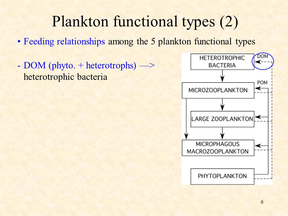 6 Feeding relationships among the 5 plankton functional types Plankton functional types (2) -DOM (phyto.