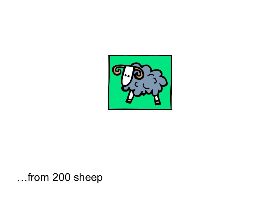 …from 200 sheep