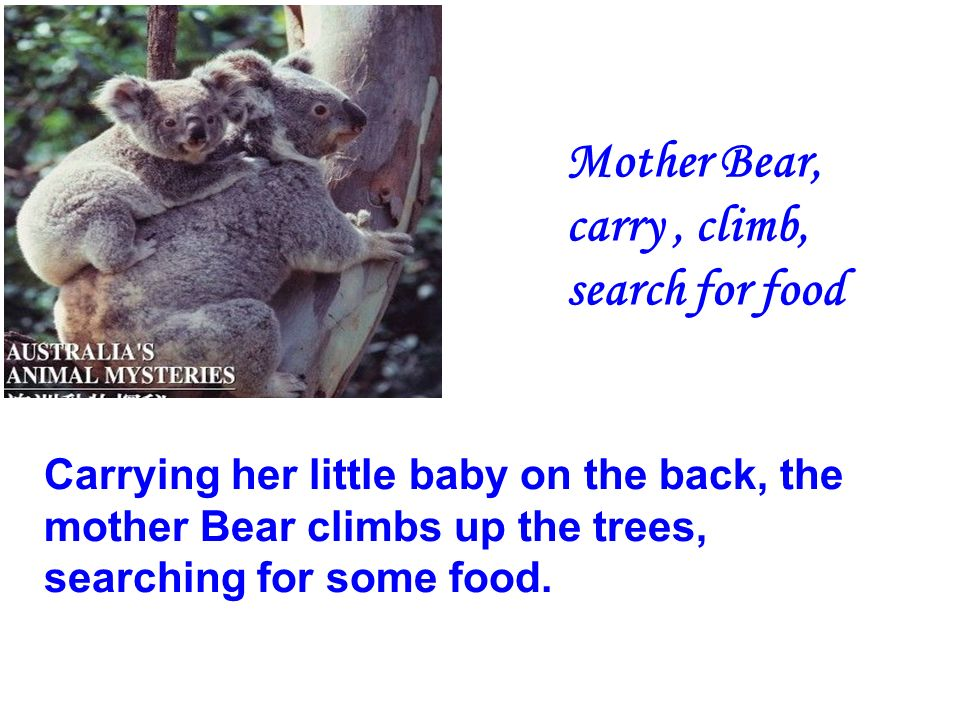 Mother Bear, carry, climb, search for food Carrying her little baby on the back, the mother Bear climbs up the trees, searching for some food.