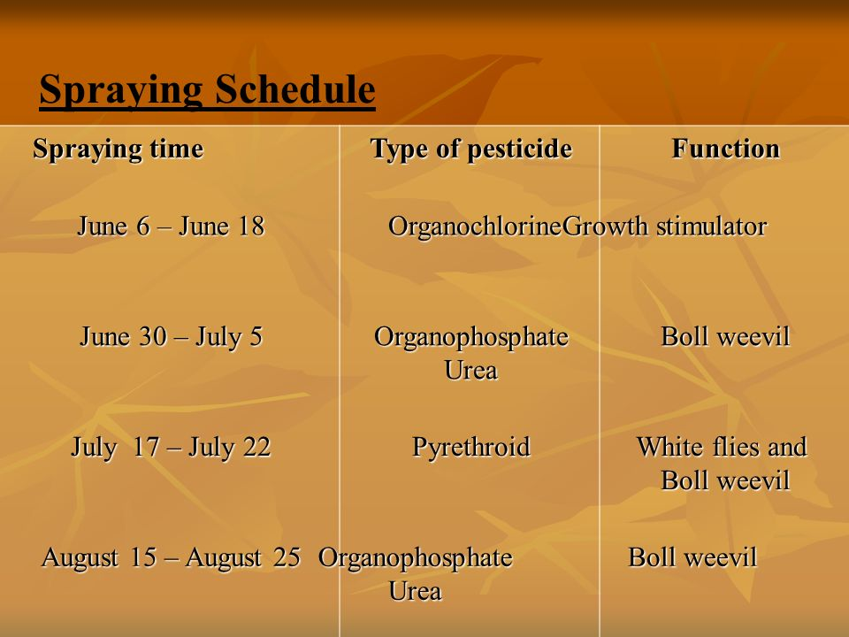 Spraying time Type of pesticide Function June 6 – June 18 Organochlorine Organochlorine Growth stimulator Growth stimulator June 30 – July 5 OrganophosphateUrea Boll weevil July 17 – July 22 Pyrethroid White flies and Boll weevil August 15 – August 25 Organophosphate Urea Urea Boll weevil Boll weevil Spraying Schedule