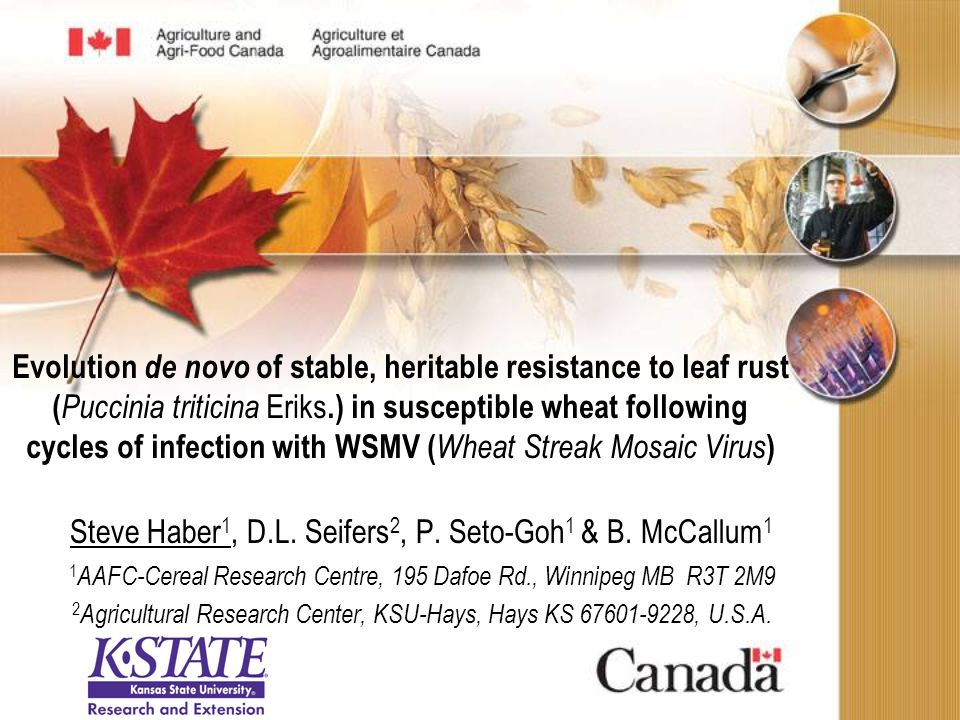 Evolution de novo of stable, heritable resistance to leaf rust ( Puccinia triticina Eriks.) in susceptible wheat following cycles of infection with WSMV ( Wheat Streak Mosaic Virus ) Steve Haber 1, D.L.