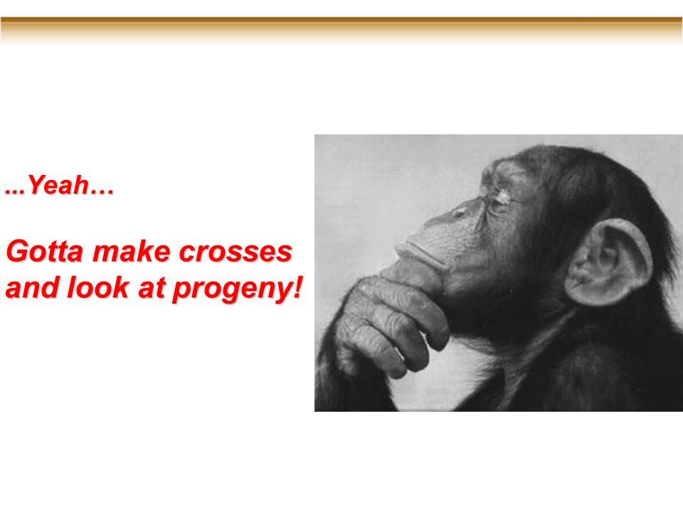 ...Yeah… Gotta make crosses and look at progeny!