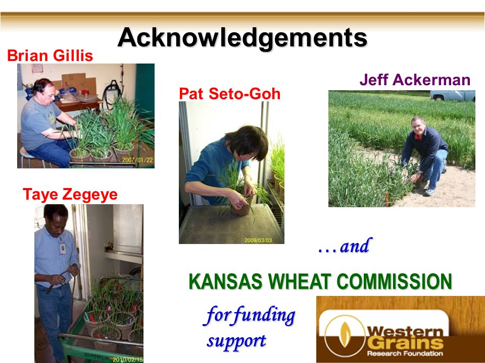 40 Acknowledgements Brian Gillis Jeff Ackerman Pat Seto-Goh Taye Zegeye KANSAS WHEAT COMMISSION for funding support …and