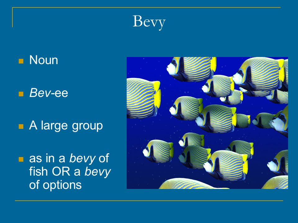 Bevy Noun Bev-ee A large group as in a bevy of fish OR a bevy of options