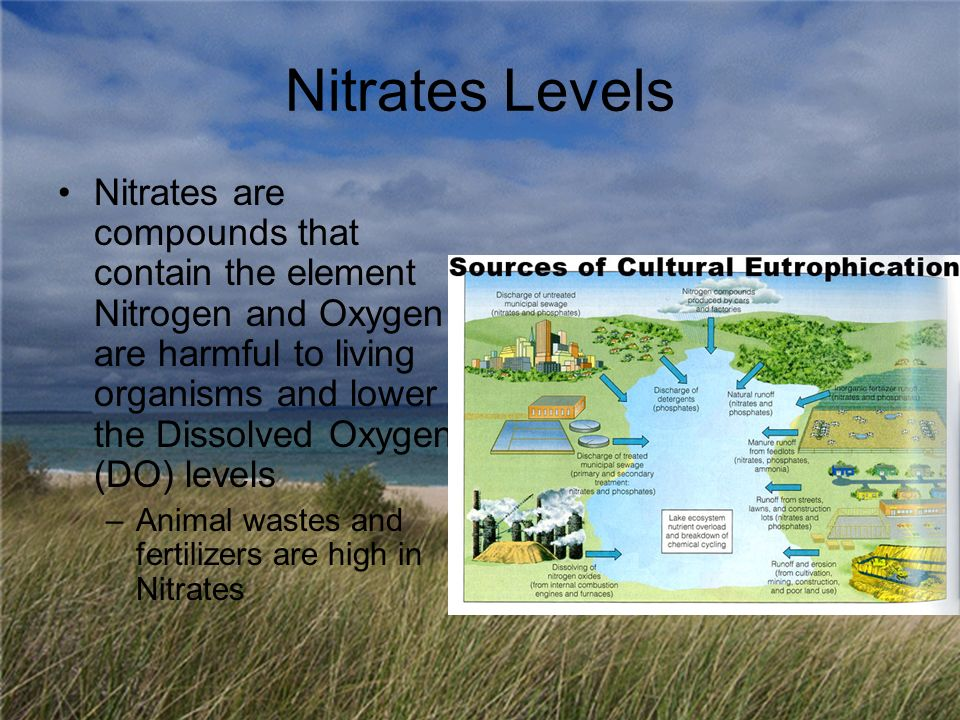 Nitrates Levels Nitrates are compounds that contain the element Nitrogen and Oxygen are harmful to living organisms and lower the Dissolved Oxygen (DO) levels –Animal wastes and fertilizers are high in Nitrates