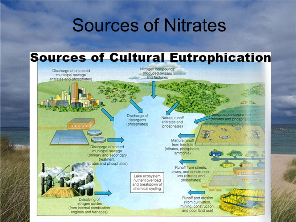 Sources of Nitrates