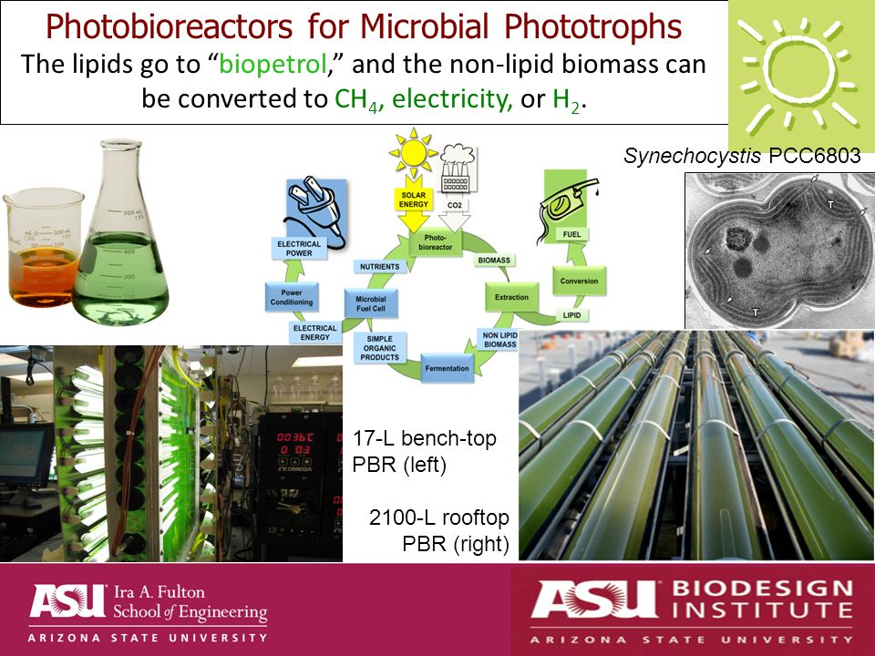 Photobioreactors for Microbial Phototrophs The lipids go to biopetrol, and the non-lipid biomass can be converted to CH 4, electricity, or H 2.