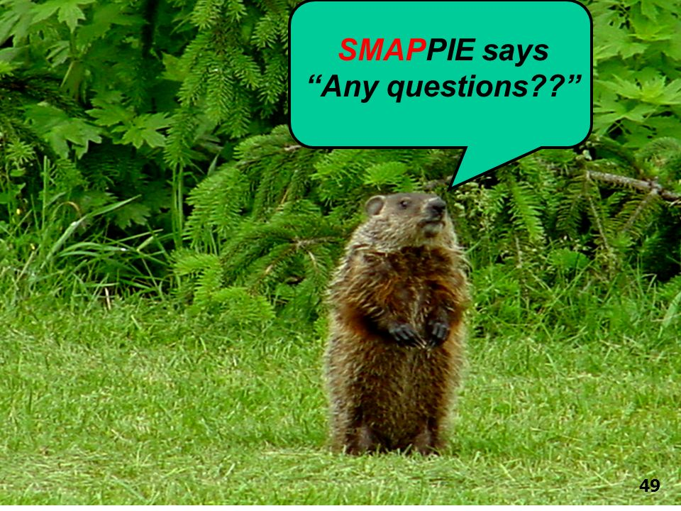 SMAPPIE says Any questions 49