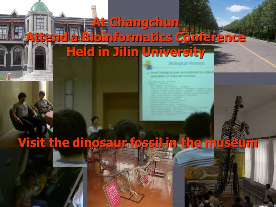 At Changchun Attend a Bioinformatics Conference Held in Jilin University Visit the dinosaur fossil in the museum