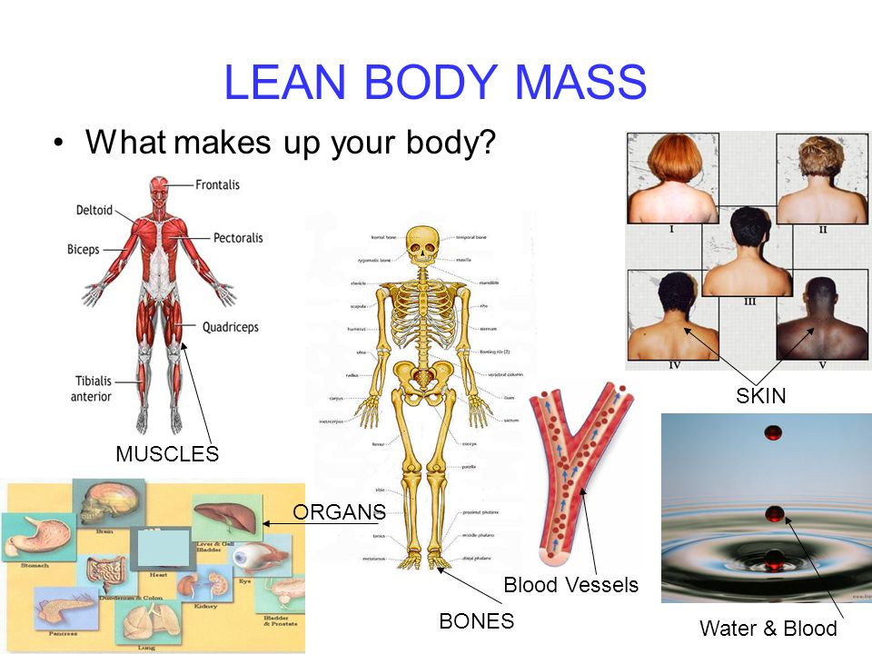LEAN BODY MASS What makes up your body MUSCLES BONES SKIN Blood Vessels ORGANS Water & Blood