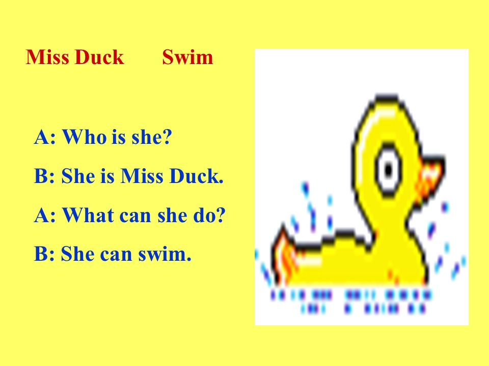 A: Who is she B: She is Miss Duck. A: What can she do B: She can swim. Miss Duck Swim