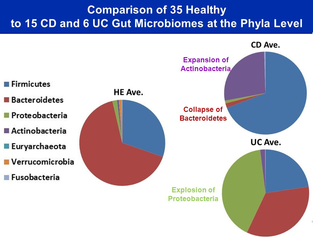 Comparison of 35 Healthy to 15 CD and 6 UC Gut Microbiomes at the Phyla Level Explosion of Proteobacteria Collapse of Bacteroidetes Expansion of Actinobacteria