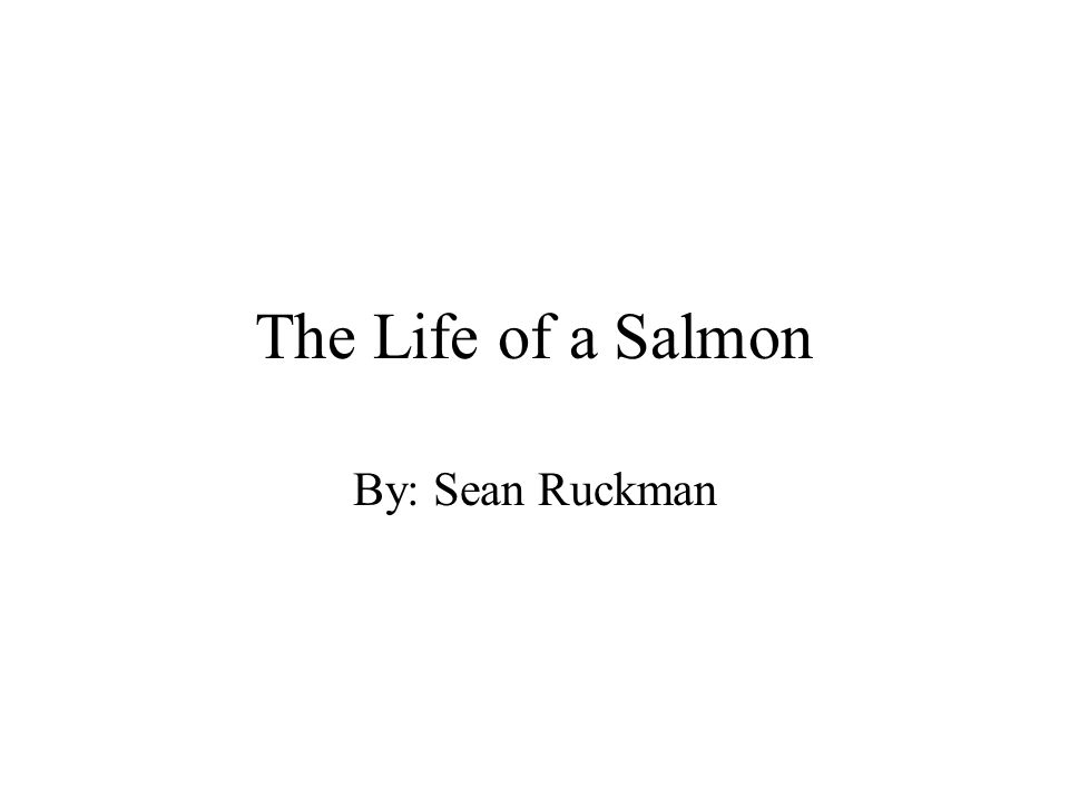 The Life of a Salmon By: Sean Ruckman