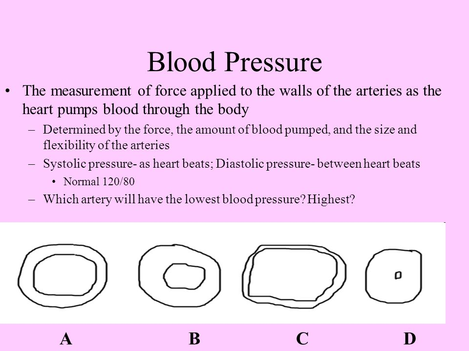Blood Pressure The measurement of force applied to the walls of the arteries as the heart pumps blood through the body –Determined by the force, the amount of blood pumped, and the size and flexibility of the arteries –Systolic pressure- as heart beats; Diastolic pressure- between heart beats Normal 120/80 –Which artery will have the lowest blood pressure.