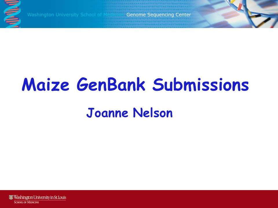Maize GenBank Submissions Joanne Nelson