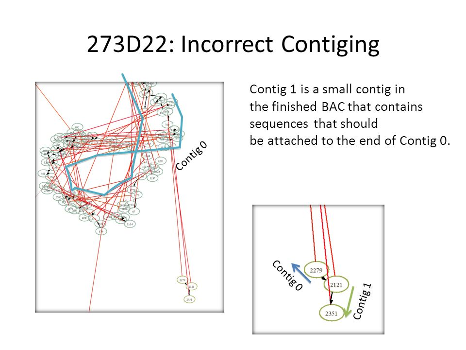 273D22: Incorrect Contiging Contig 0 Contig 1 Contig 1 is a small contig in the finished BAC that contains sequences that should be attached to the end of Contig 0.