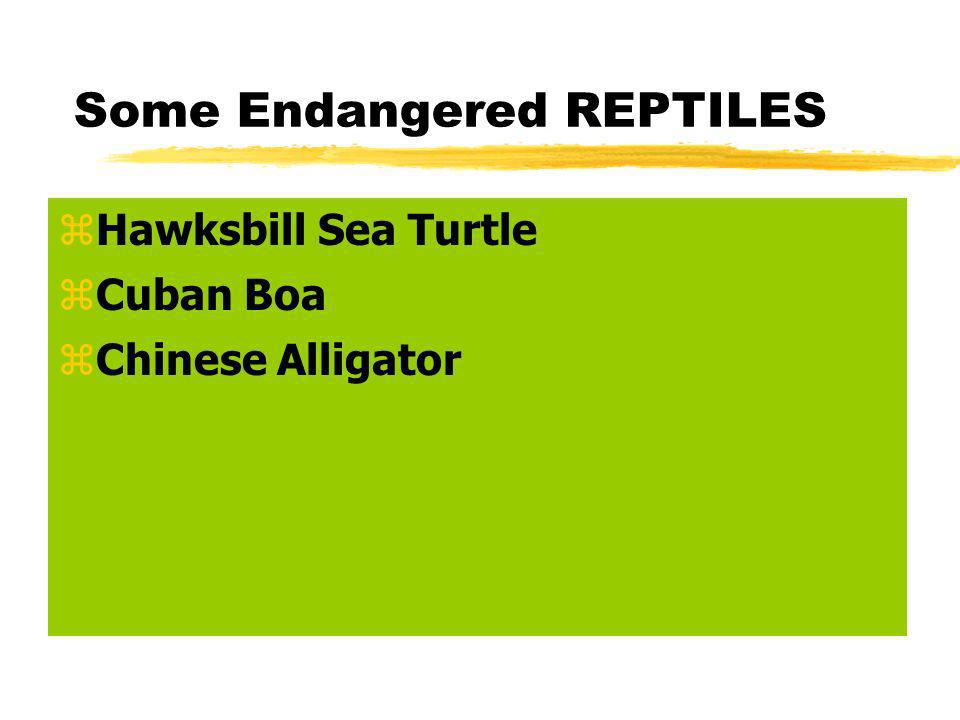 Some Endangered REPTILES zHawksbill Sea Turtle zCuban Boa zChinese Alligator