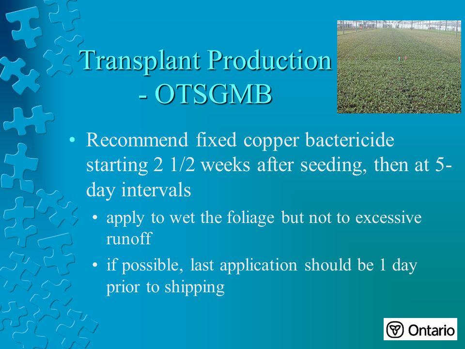 Transplant Production - OTSGMB Recommend fixed copper bactericide starting 2 1/2 weeks after seeding, then at 5- day intervals apply to wet the foliage but not to excessive runoff if possible, last application should be 1 day prior to shipping