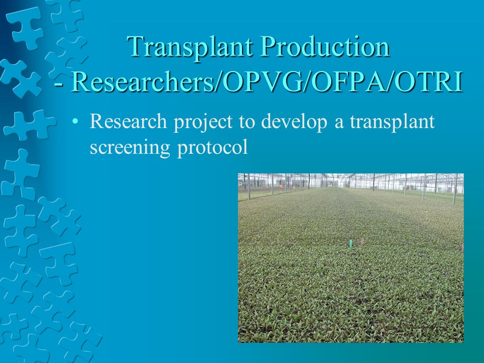 Transplant Production - Researchers/OPVG/OFPA/OTRI Research project to develop a transplant screening protocol