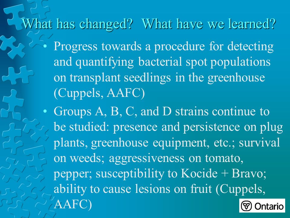 Progress towards a procedure for detecting and quantifying bacterial spot populations on transplant seedlings in the greenhouse (Cuppels, AAFC) Groups A, B, C, and D strains continue to be studied: presence and persistence on plug plants, greenhouse equipment, etc.; survival on weeds; aggressiveness on tomato, pepper; susceptibility to Kocide + Bravo; ability to cause lesions on fruit (Cuppels, AAFC)