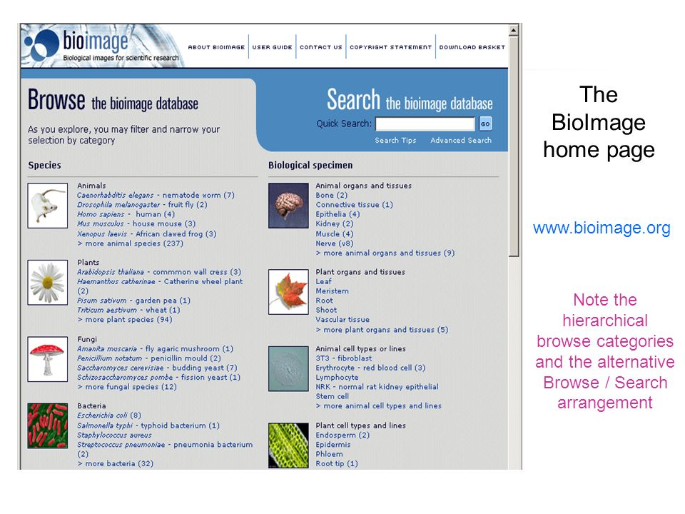 The BioImage home page www.bioimage.org Note the hierarchical browse categories and the alternative Browse / Search arrangement
