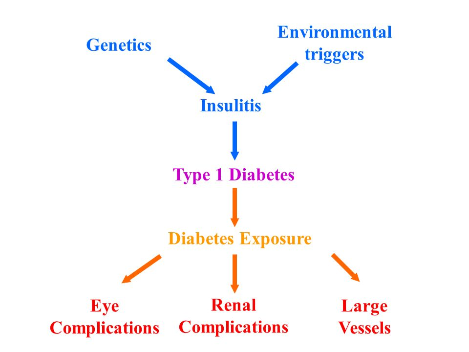 Genetics Environmental triggers Insulitis Type 1 Diabetes Diabetes Exposure Renal Complications Eye Complications Large Vessels