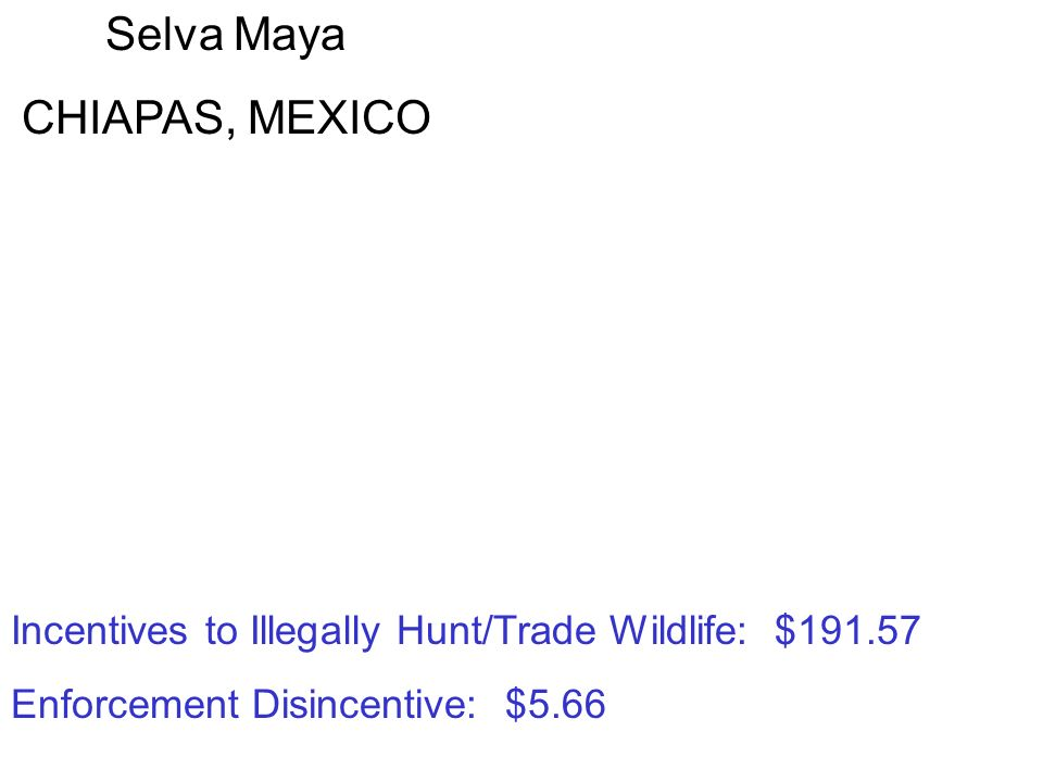 Selva Maya CHIAPAS, MEXICO Incentives to Illegally Hunt/Trade Wildlife: $191.57 Enforcement Disincentive: $5.66