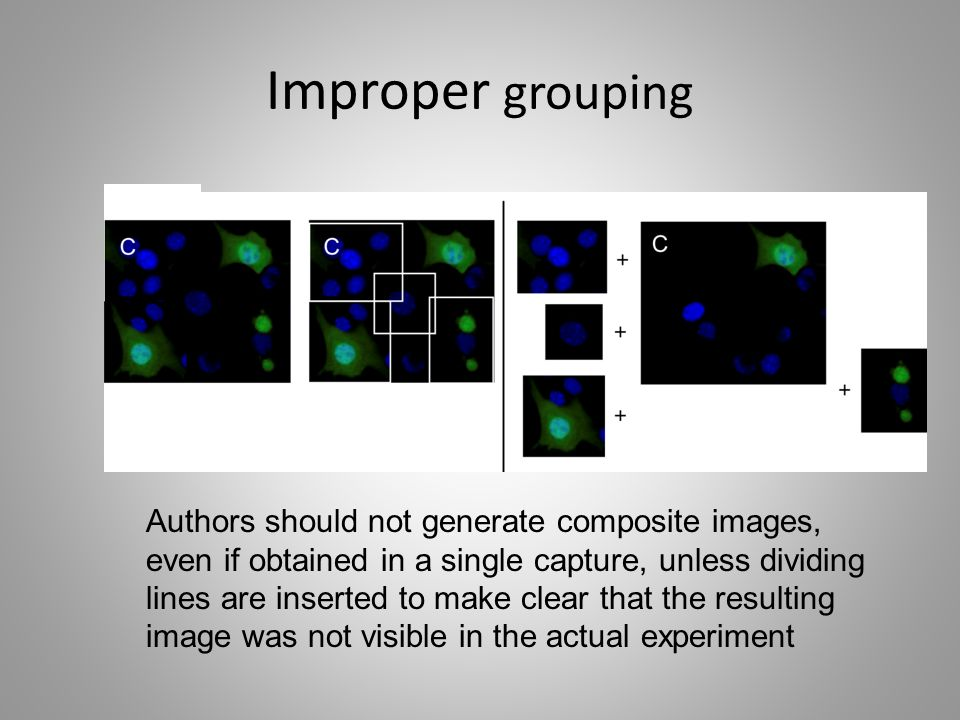 Improper grouping Authors should not generate composite images, even if obtained in a single capture, unless dividing lines are inserted to make clear that the resulting image was not visible in the actual experiment