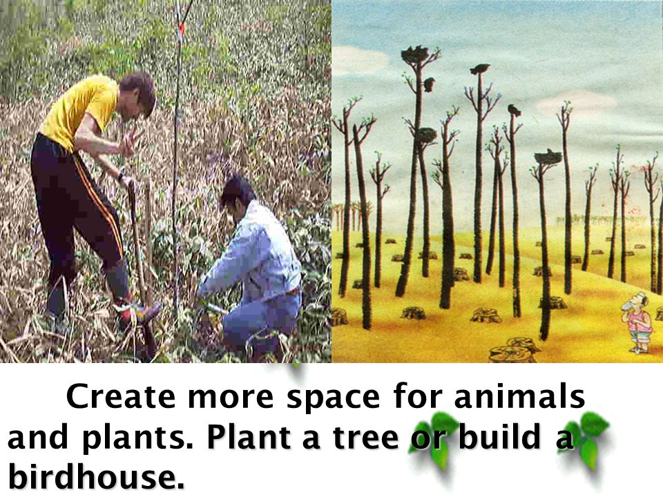 Plant a tree or build a birdhouse. Create more space for animals and plants.