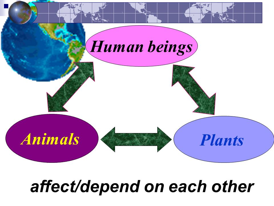 Human beings Plants Animals affect/depend on each other