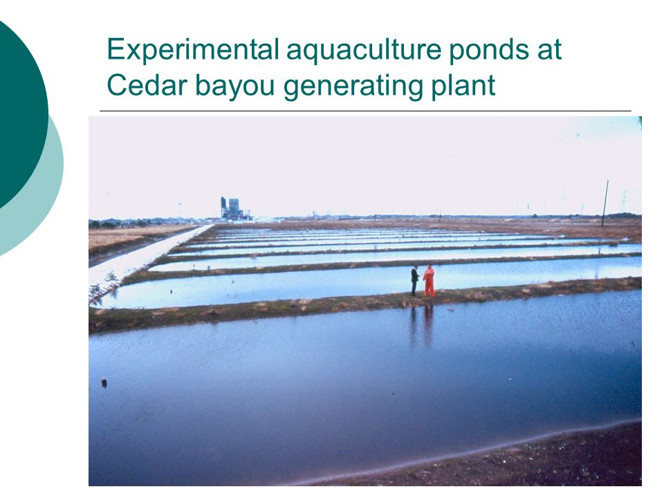 Experimental aquaculture ponds at Cedar bayou generating plant
