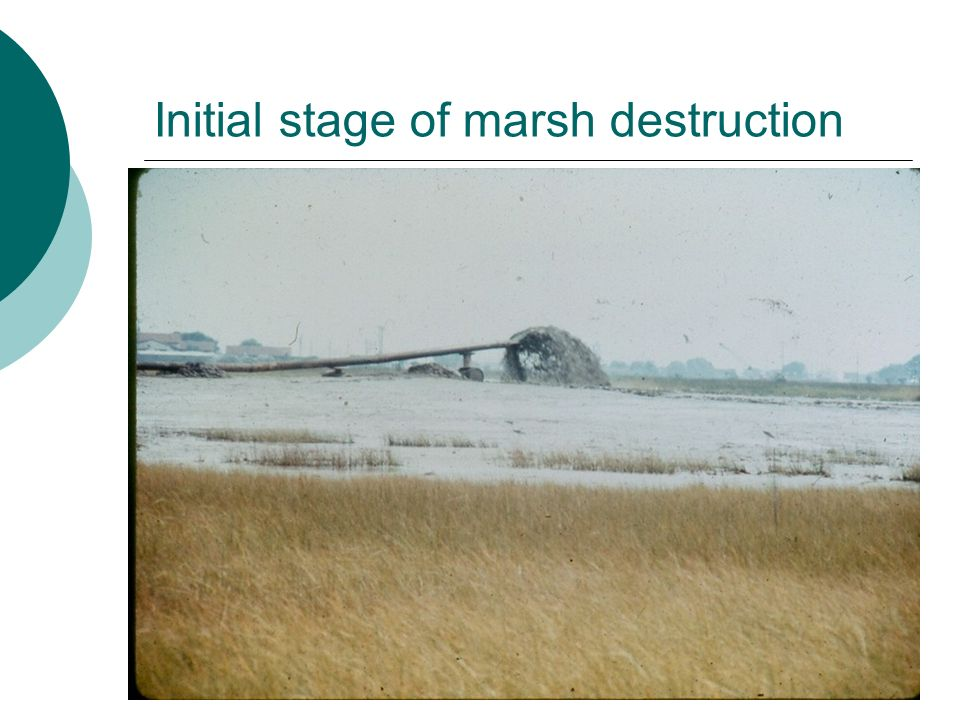 Initial stage of marsh destruction