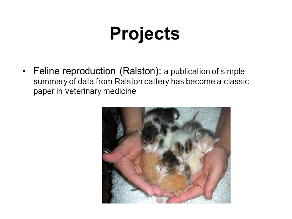 Projects Feline reproduction (Ralston): a publication of simple summary of data from Ralston cattery has become a classic paper in veterinary medicine